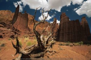 Download the design of the wall poster of the rocky cliffs in the desert and the dry trunk