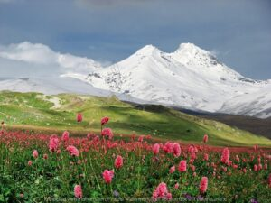Download snowy wall and flower meadow wall poster design