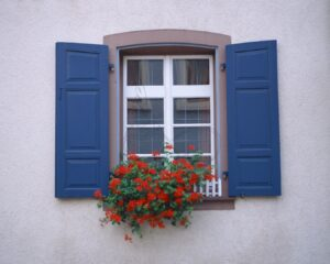 Download wooden window wall poster design and red flower colored wall
