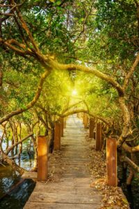 Download wall poster design of wooden bridge and trees on the river